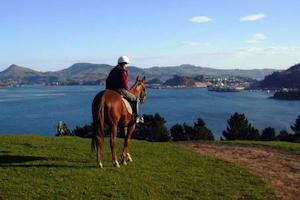 Hare Hill - Scenic Harbour Horse Trek