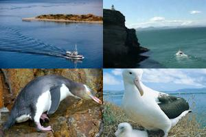 Otago Peninsula package from Dunedin incl. City Sightseeing - full day