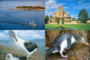 Otago Peninsula package from Dunedin incl. Larnach Castle - full day