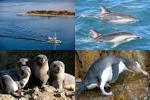 Otago Peninsula package from Dunedin - full day