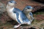 Pohatu Penguins Nature and Sea Kayak Tours